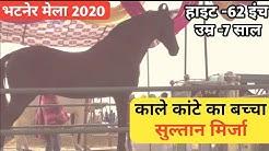 हनुमानगढ़ मेले मैं पहुंचा काले कांटे का बच्चा सुल्तान मिर्जा -Bhatner Mela 2020
