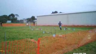 Nadac Agility Elitejumpers1q Border Terrier May2010.avi