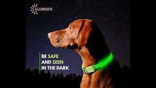 Illumiseen's LED Dog Collar