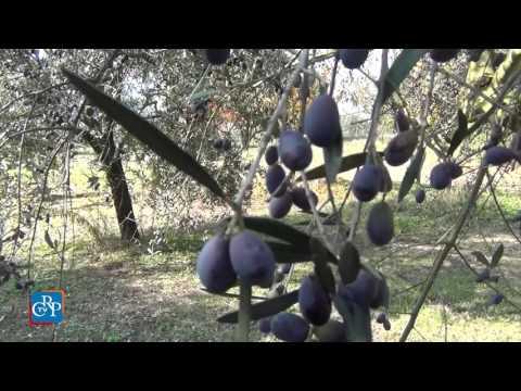L'extravergine del Monferrato