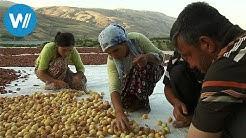 Anatolien, das Land wo die Aprikosen blühen (360° - GEO Reportage)