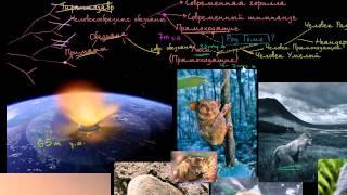 Обзор эволюции человека