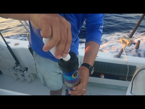 Baja Marlin, Roosters & Tuna Fishing