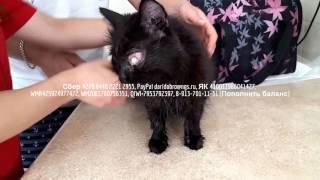 У кошки вытек глаз и начался абсцесс нужна финансовая помощь на операцию