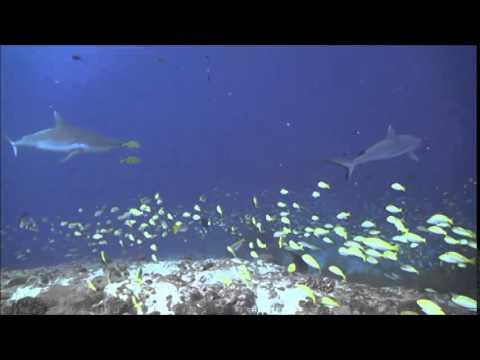 Oceans In Peril