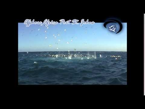 Gannet Bombs by Offshore Africa PSJ