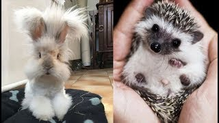 """Download Cute baby animals Videos """"Cat catch Jerry"""" Cutest Animals #77 Mp3 and Videos"""
