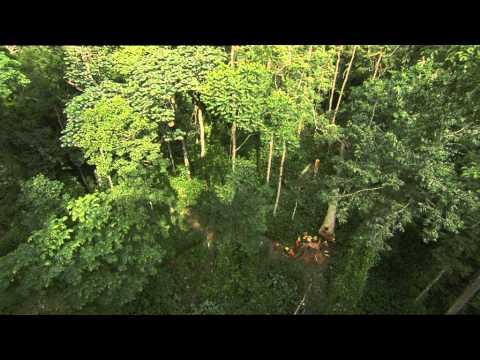 C'est pas sorcier -la Forêt du congo : sur la piste des bois tropicaux