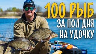 100 РЫБ на удочку за полдня! Супер рыбалка на поплавок.