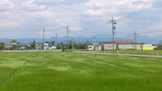 風で波打つ水田@えちぜん鉄道