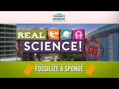 Real Science! Fossilize A Sponge! | Museum At Home