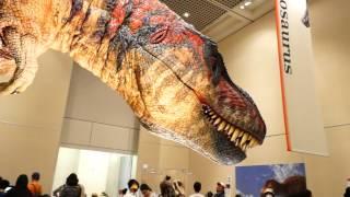大阪市自然史博物館「恐竜の成長展」 テラノサウルスノ骨格を元に再現さ...