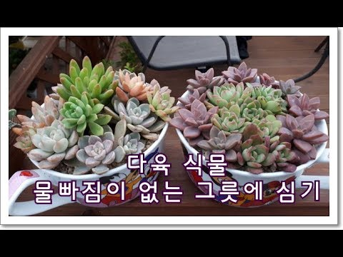 planting succulents in pots without drainage youtube. Black Bedroom Furniture Sets. Home Design Ideas