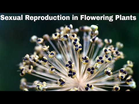 CBSE Class 12 || Sexual Reproduction in Flowering Plants || Full Chapter || by Shiksha House