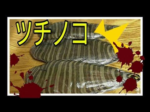 シマウシノシタとかいう謎の魚食べてみた