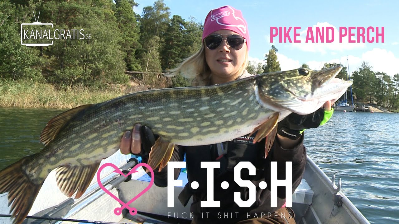 Pike perch - a fish that does not happen much