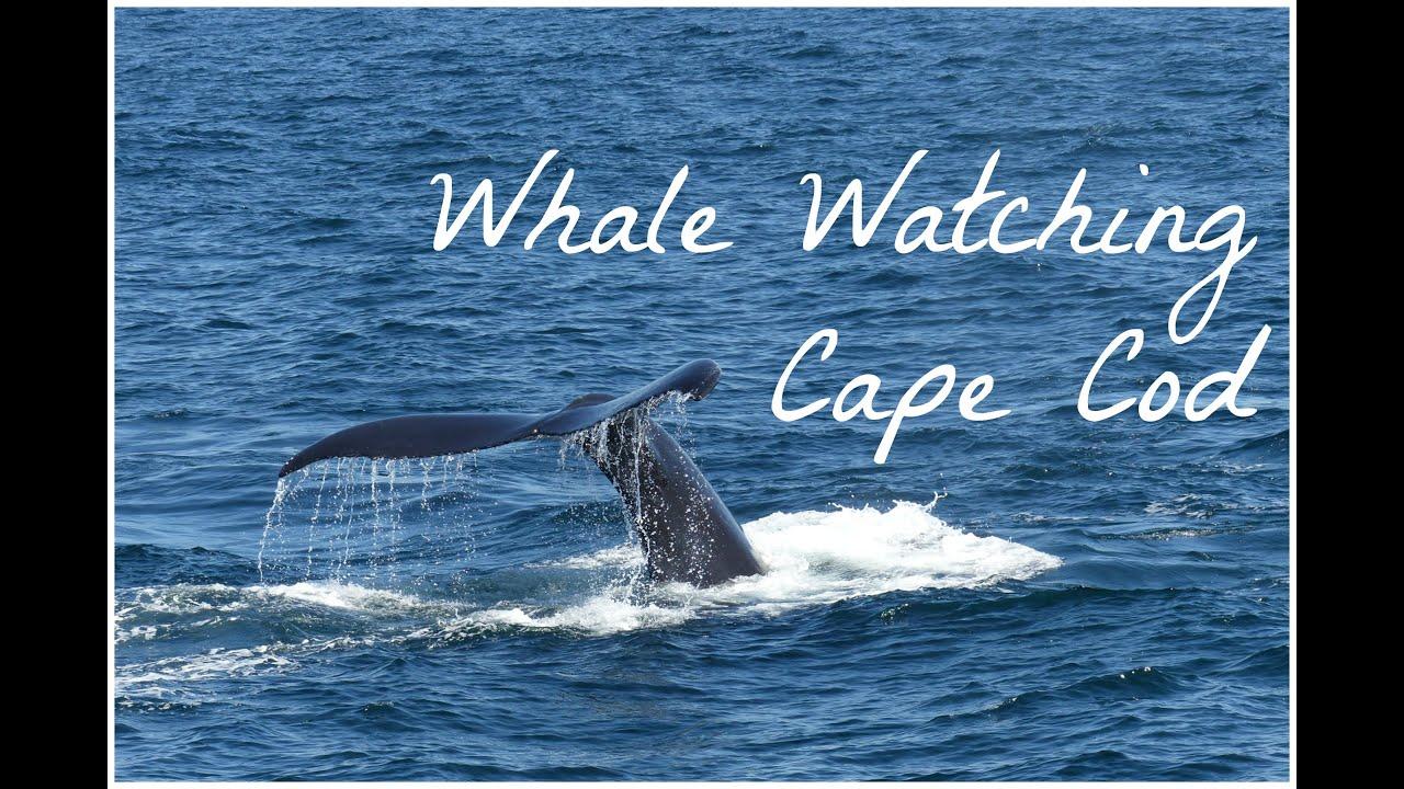 Whale Tours Cape Cod