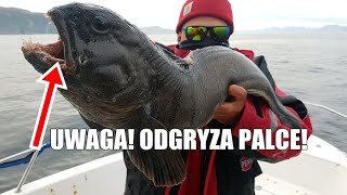 Dorsze, zębacze, halibuty - Soroya Norwegia - wędkarski VLOG #28