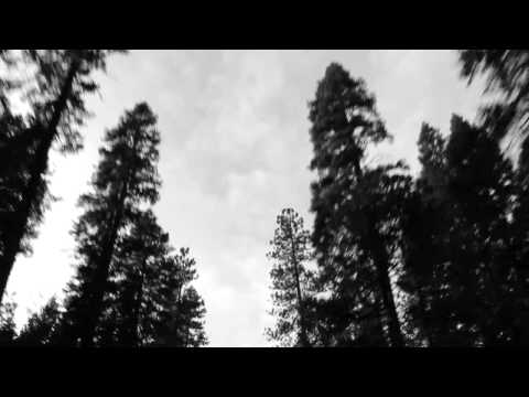 Stars of the Lid - The Artificial Pine Arch Song mp3