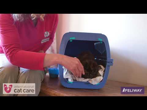 Encouraging your cat to be happy in a cat carrier
