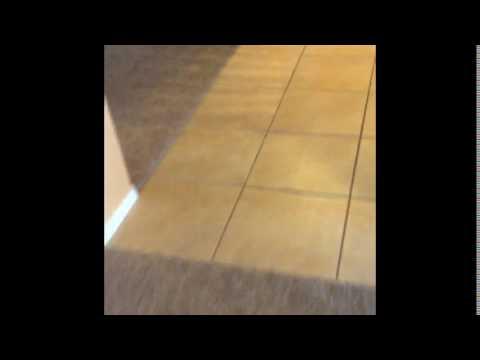 Weird Cat Video And Weird Girl Doing Tricks On Skateboard