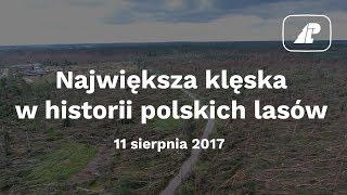 Sztab kryzysowy w Lasach Państwowych