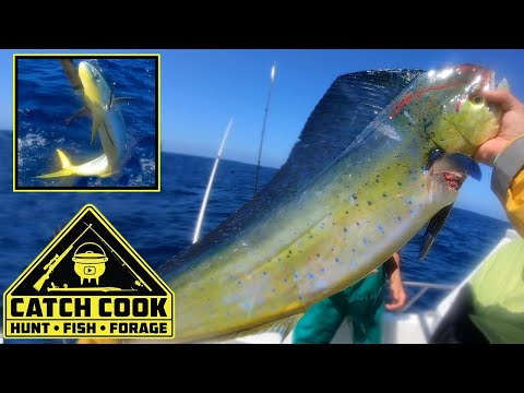 Yellow tail and Dorado [Dolphinfish] Fishing Cape Point CATCH COOK