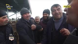 Çorum Hayvan Pazarındayız - SULTAN PAZARI / Çiftçi TV