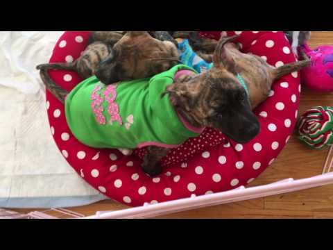 Lucky Dog Animal Rescue's T Puppies Enjoying National Puppy Day