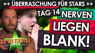 Dschungelcamp 2019 - Tag 14: TRÄNEN! NERVEN-Zusammenbruch vor FINALE! Gewinnt Evelyn?