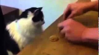 Repeat youtube video Кот играет в напёрстки