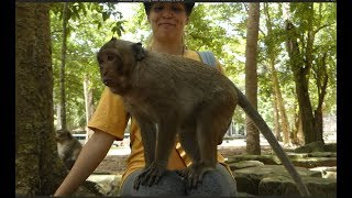 Very lovely small baby monkey like human & playing with human