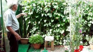 Gardening Tips with Dennis Hubbard No. 49