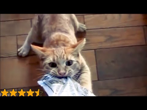 Funny Cats The Most Mischievous Cats in the World Funny Videos Compilation