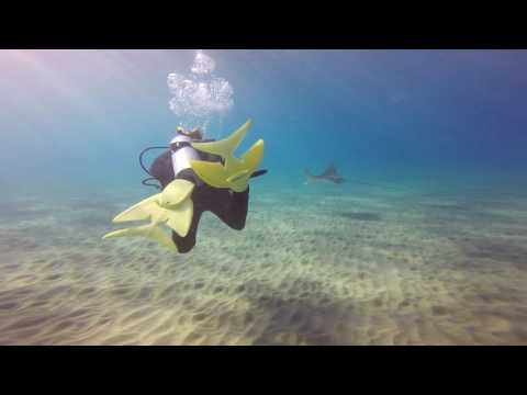 081916 Makena Swimming with an Eagle Ray