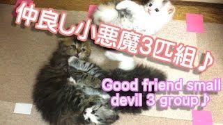 子猫たち、いつも仲良しです。いやーそれにしても今最高ですw めちゃく...