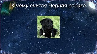 К чему снится Черная собака (Сонник)