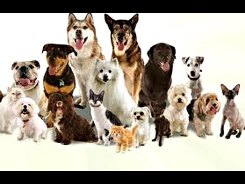Best Video | All Dog Breeds In The World - [A to Z]  | With Details