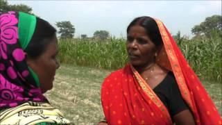 Cauliflower Transplantation Bhojpuri