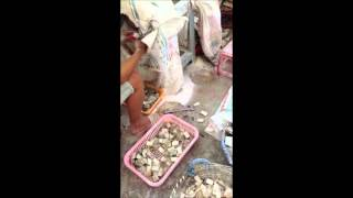 Shell blanks inlay materials process mother of pearl, paua, abalone