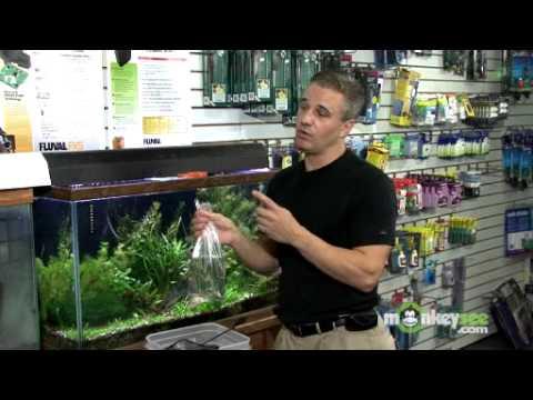 Adding Fish To Your Aquarium