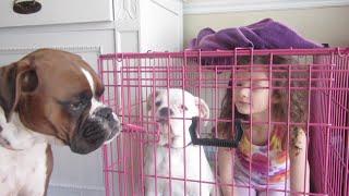 Bad Dogs WK 2166  Bratayley