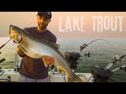 Lake Superior Lake Trout And Salmon - Ft. Fish North MN