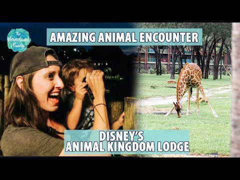 Six FREE Activities For Your Family- Disney's Animal Kingdom Lodge 2018