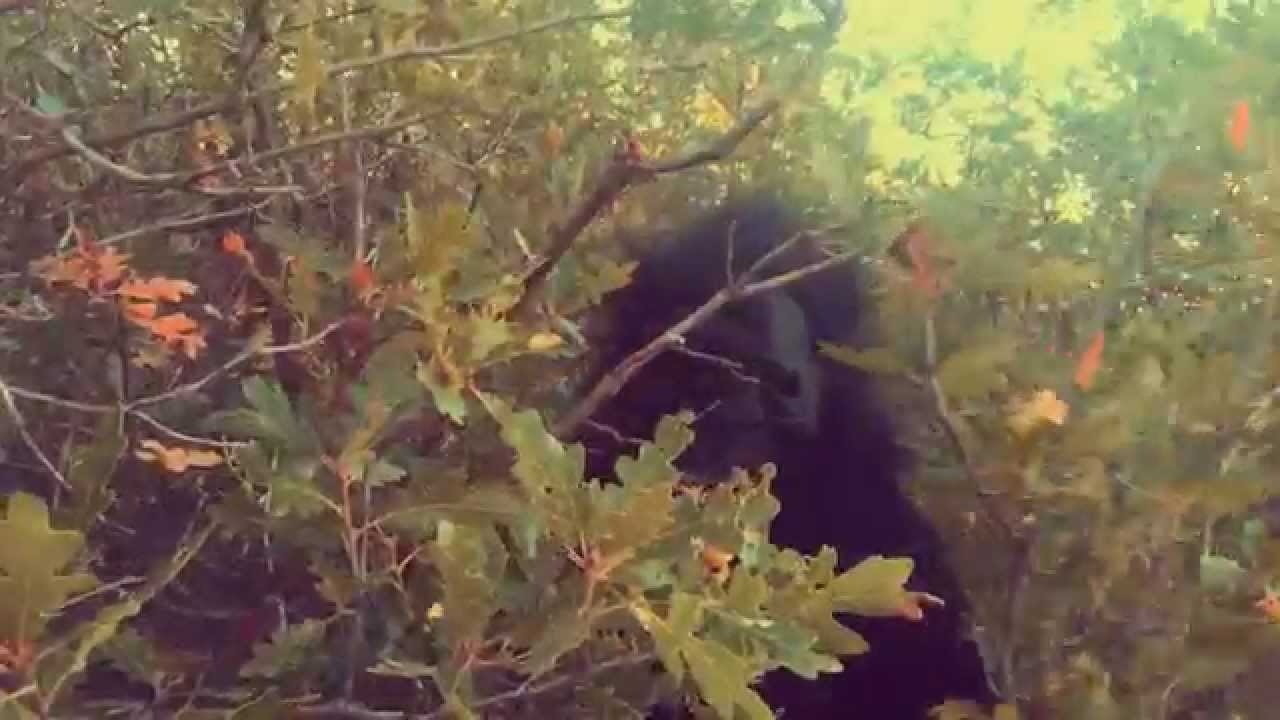 November Central Colorado Bigfoot Research – Footprint Pictures