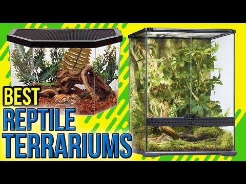 8-best-reptile-terrariums-2017