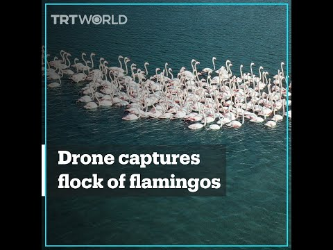 Flamingos take shelter during the winter in Turkey