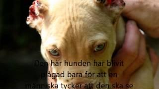 djurplågeri hundar