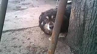 Собака говорун))))