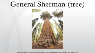 General Sherman (tree)